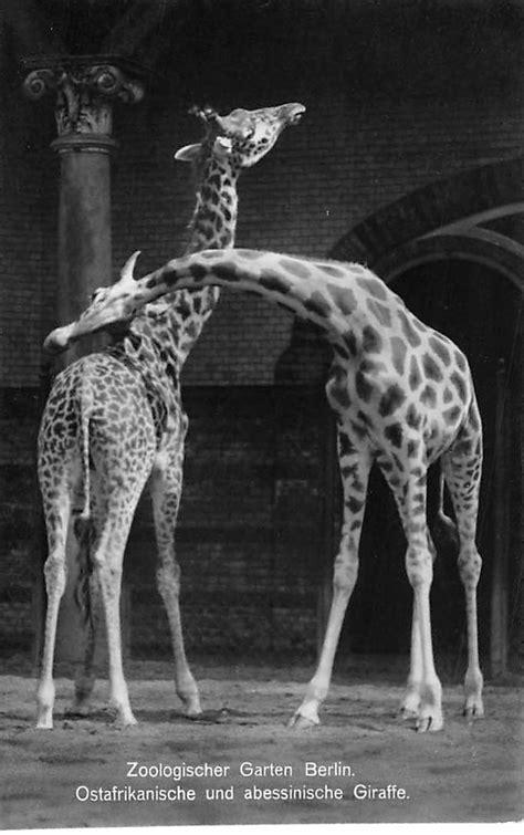 Jugendherberge Berlin Zoologischer Garten by Berlin Zoologischer Garten Ostafrikanische Und