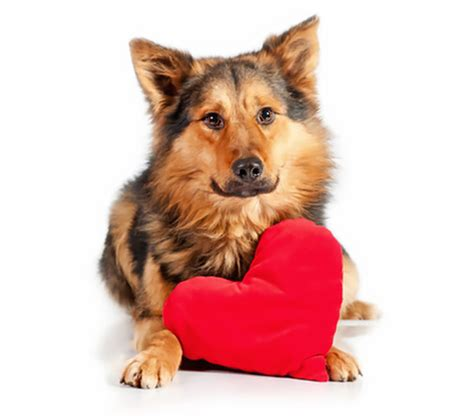 puppies with hearts my has a murmur how serious is that fido universe
