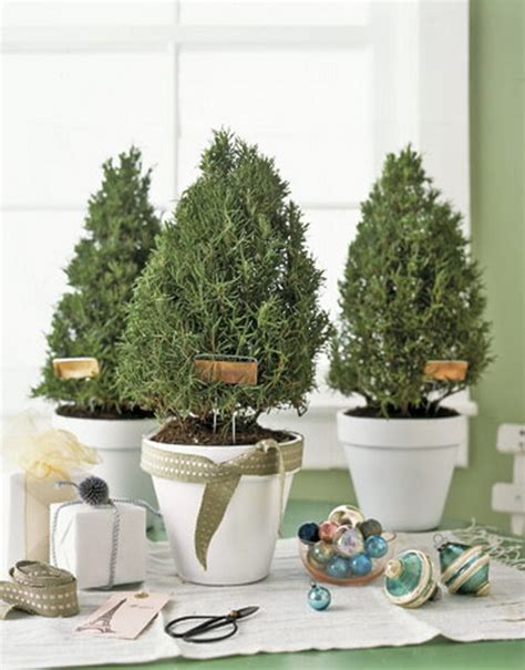 creative indoor plants decors for christmas new year