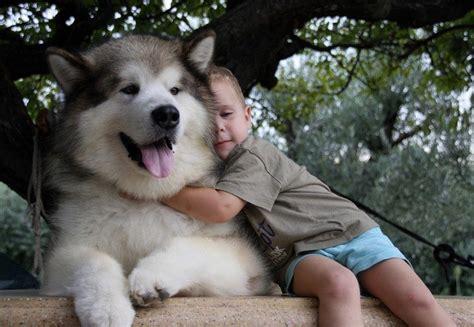 cuanto sale un chow chow most dangerous dogs appearances can be deceiving