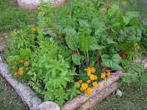 how to build your own organic garden anywhere and save