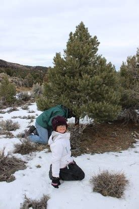 rants from the hill a christmas tree grows in the nevada