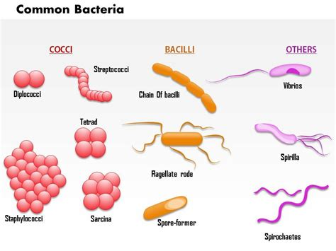 0714 common bacteria infecting human images for