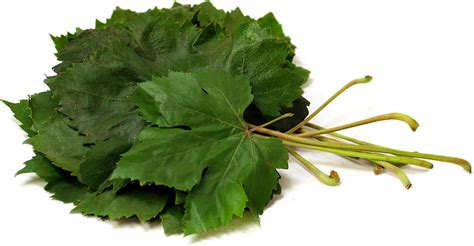 grape leaves information recipes and facts