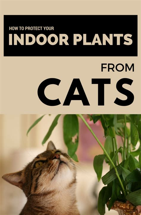 protect  indoor plants  cats  images
