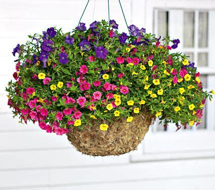 Bunga Artificial Broken White color waves hanging basket annual collection 6 plants