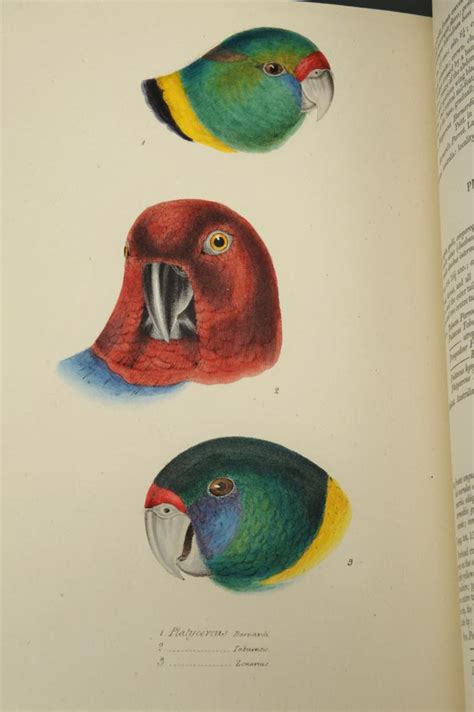 Lot 161 Gould S Synopsis Of The Birds Of Australia George
