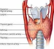 Obat Yodium obat hipertiroid tradisional