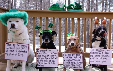 safe house dog rescue 192 best giddy twinkle tips of the day images on pinterest peace paws rescue and