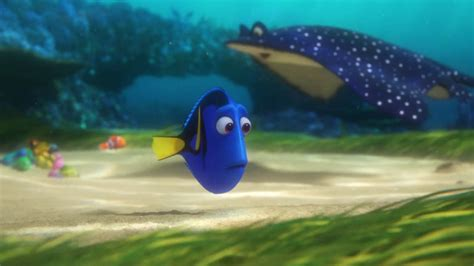 Disney Pixar Finding Dory finding dory petition asks disney pixar to protect the
