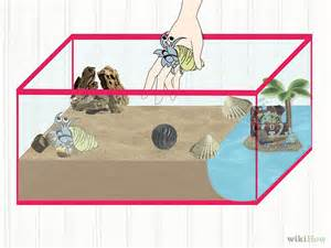 do hermit crabs need a heat l hermit crab all info about pets