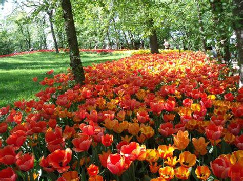 giardino fiorito torino un sabato con messer tulipano in provincia di torino la