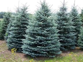 best deer resistant plants and shrubs for your area the