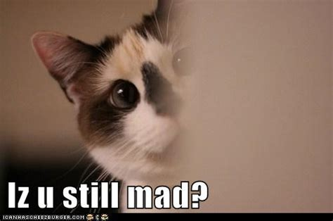 U Still Mad Meme - iz u still mad lolcats lol cat memes funny cats funny cat pictures with words on them