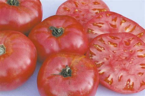 4 fruit company bv gardening the secret world of tomatoes winnipeg free