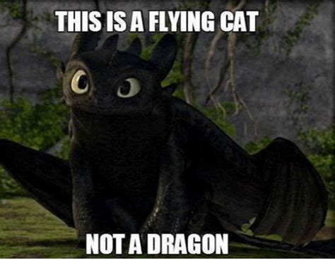 Flying Cat Meme - this is a flying cat not a dragon cats meme on sizzle