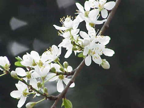 fiore di bach fiori di bach per rilassarsi e dormire