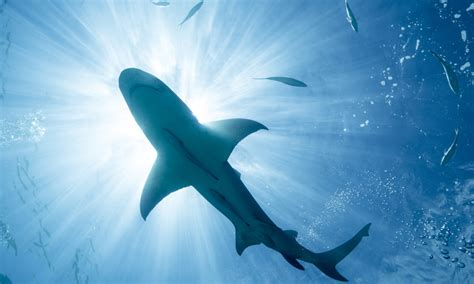 images of sharks can wearing magnets really repel sharks howstuffworks