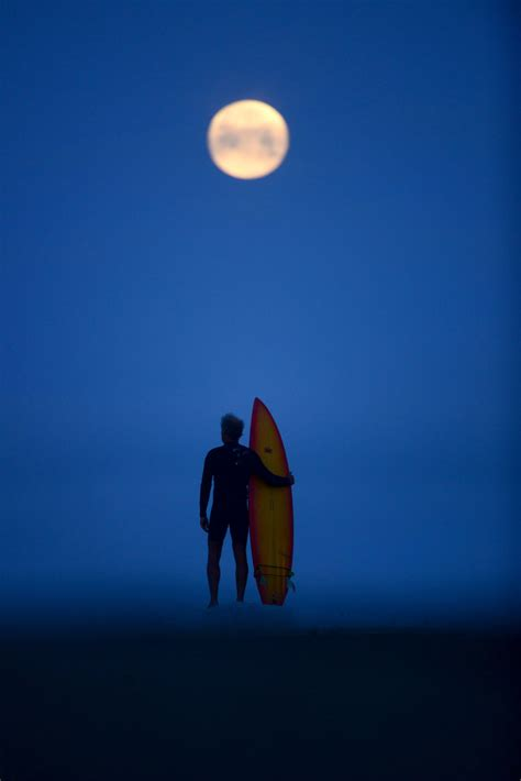 nice night  surfing beware  sharks