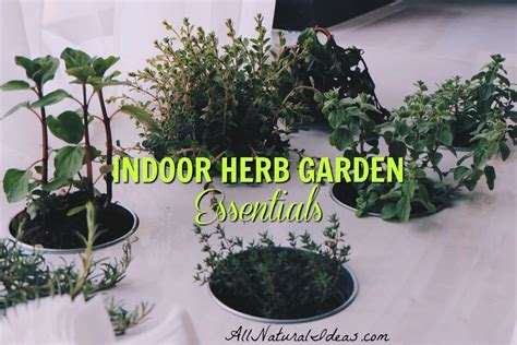 herb garden indoor indoor herb garden the essentials all natural ideas
