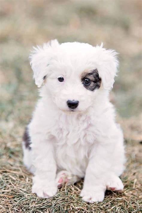 looking for a puppy holy moly this puppy is actually looking for a home click through for