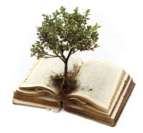 grow books scripture meditations on psalm 1 19 and 2 timothy 3