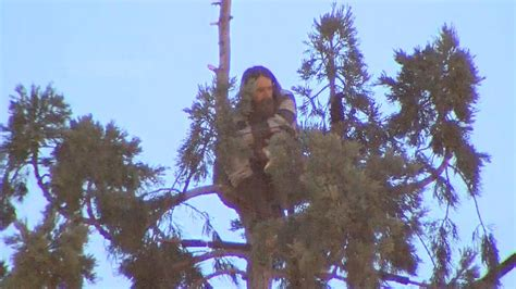 downtown tree climbs after 24 hours in downtown seattle tree