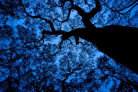 Trijee Blue tree lorenphotos