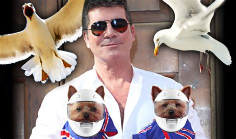 simon cowell dogs x factor s simon cowell gets dogs crash helmets for gull attacks daily