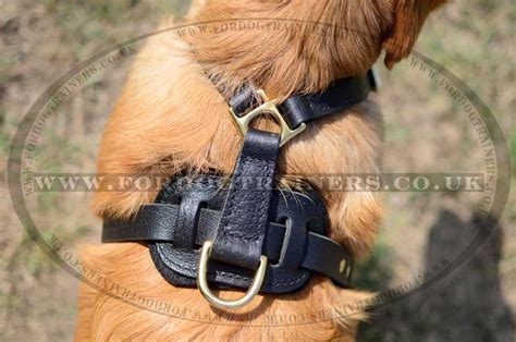 best harness for golden retriever harness of the best design of leather for retriever h10 1052 leather