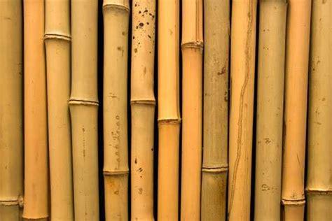 artikel membuat suling bambu bambu sebagai bahan bangunan arsitag