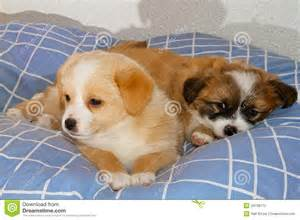 puppies cuddling stock photography image 34738172