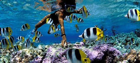cheap french polynesia holidays save  french polynesia packages flight centre