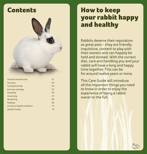 how to care for a excel rabbit care guide