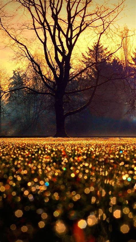girly autumn wallpaper sparkle 128 fall wallpapers for your desktop