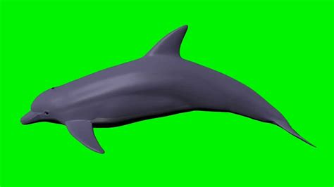 How To Make A 3d Dolphin Out Of Paper - green screen dolphin 3d swimming cycle