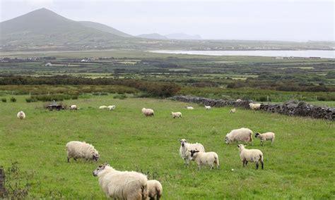 ireland vacation with airfare in kilkenny groupon getaways
