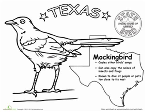 texas state bird worksheet education com