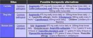 can dogs take human antibiotics bite antibiotic doxycycline