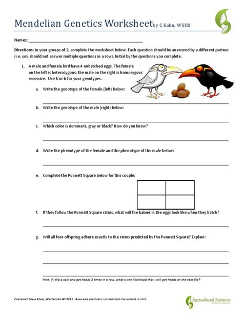 Mendelian Genetics Worksheet mendelian genetics worksheet