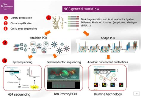 illumina sequencing workflow illumina sequencing workflow best free home design
