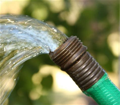 choose  garden hose  watering tomatoes