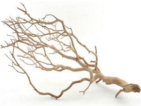 manzanita branch manzanita branch1 jpg