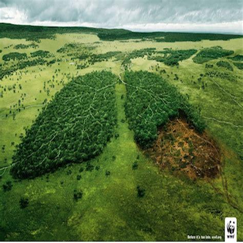 imagenes ecologicas impactantes ca 241 as sociales