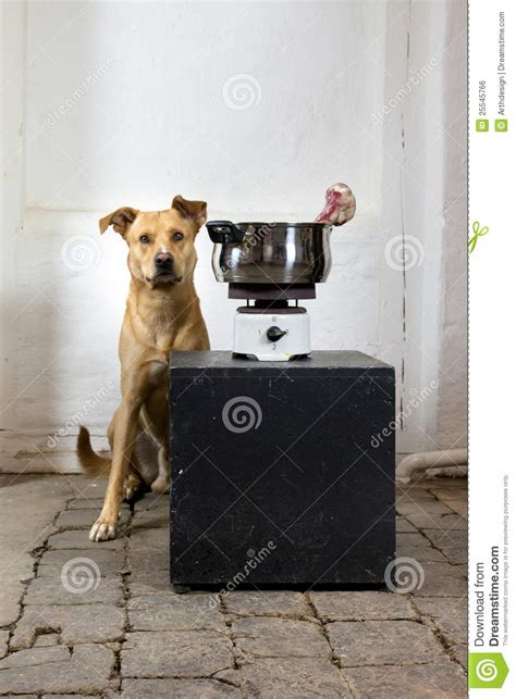 how to cook dogs on stove a with an cook stove stock photo image 25545766