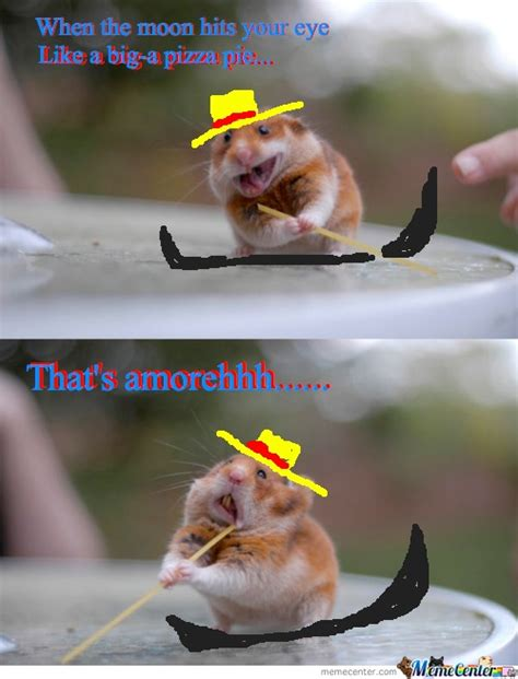 Meme Images Funny - 40 very funny hamster meme images and pictures