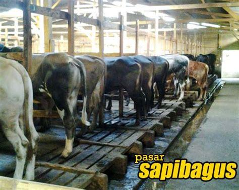 Jual Bibit Sapi Perah Jantan pemkab kbb siapkan bantuan berbagai jenis hewan ternak