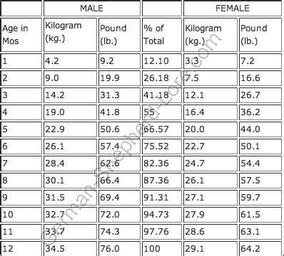 yorkie poo weight chart german shepherd growth chart breeds board growth charts german