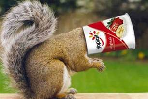 Yoplait containers can be deadly to small animals mnn