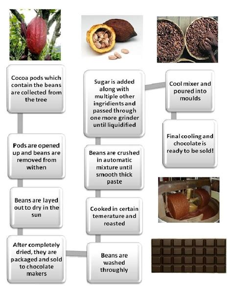 production of chocolate flowchart 6 best images of cookie flow chart flow chart